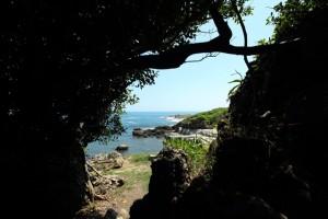 防風林所形成的狀似台灣島的甬道外,是波瀾壯闊的東部海岸。f/10, 1/125s, ISO-100。