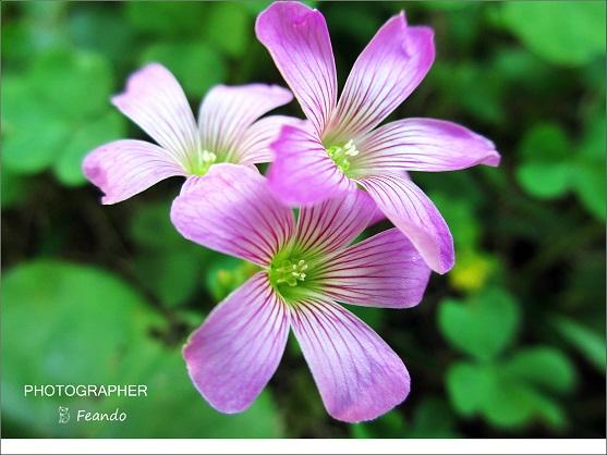 盛開花朵爭奇鬥艷。